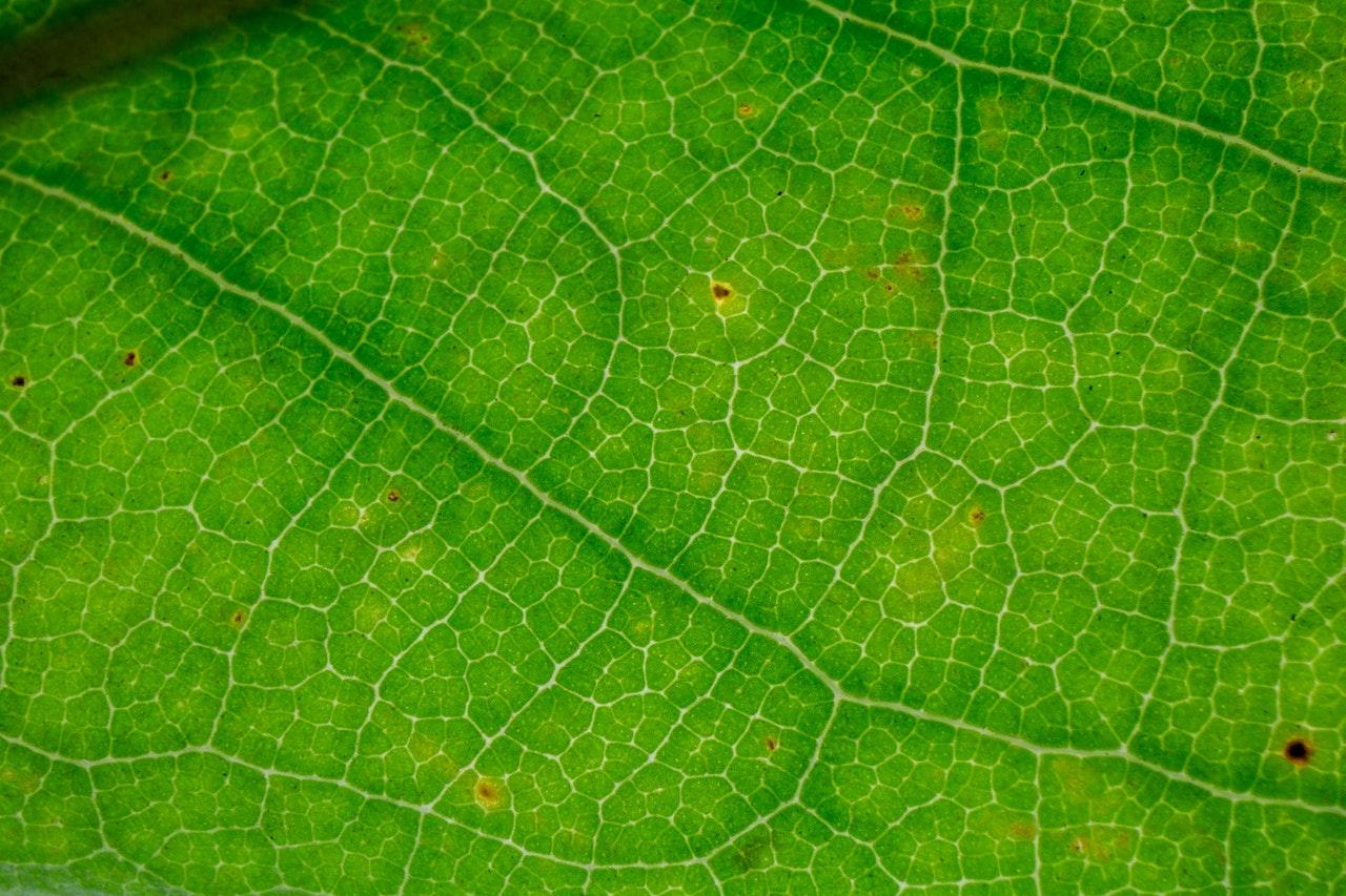 maladie rouille plante