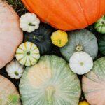 potager légumes hiver