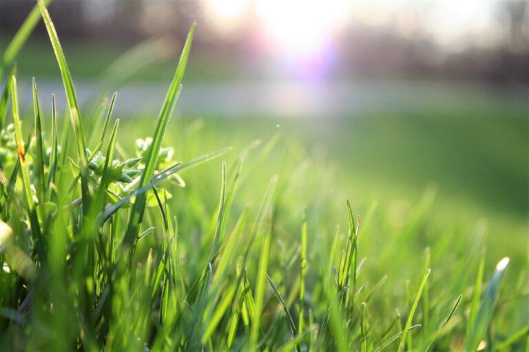 Comment éviter les mauvaises herbes