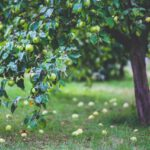 planter au pied d'un arbre fruitier
