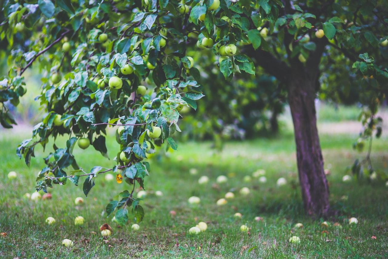 Que planter au pied d'un arbre fruitier ?