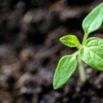 planter en hiver