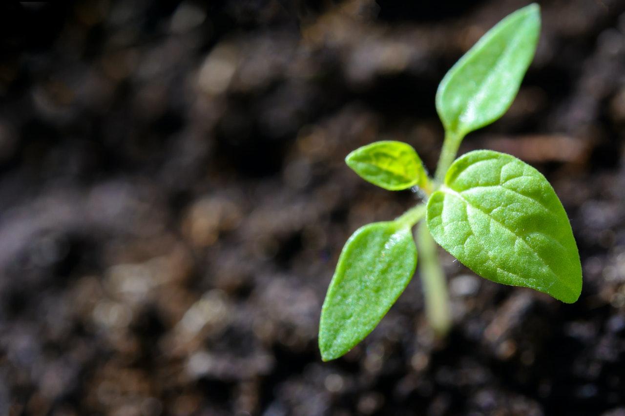 Que planter en hiver ?