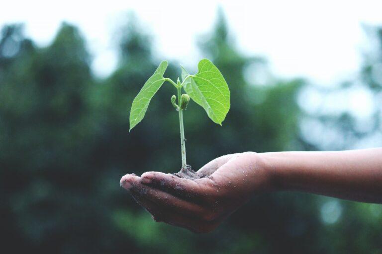 planter en mars
